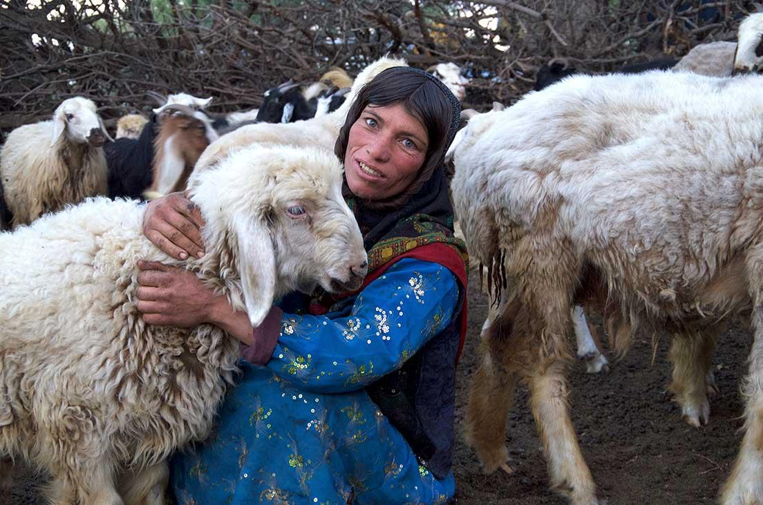 Nomad Woman Sheep Iran