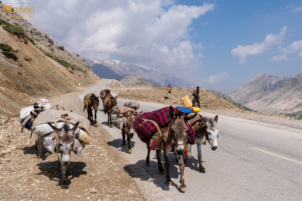 donkeys on the roads of Zagros mountains - Iran