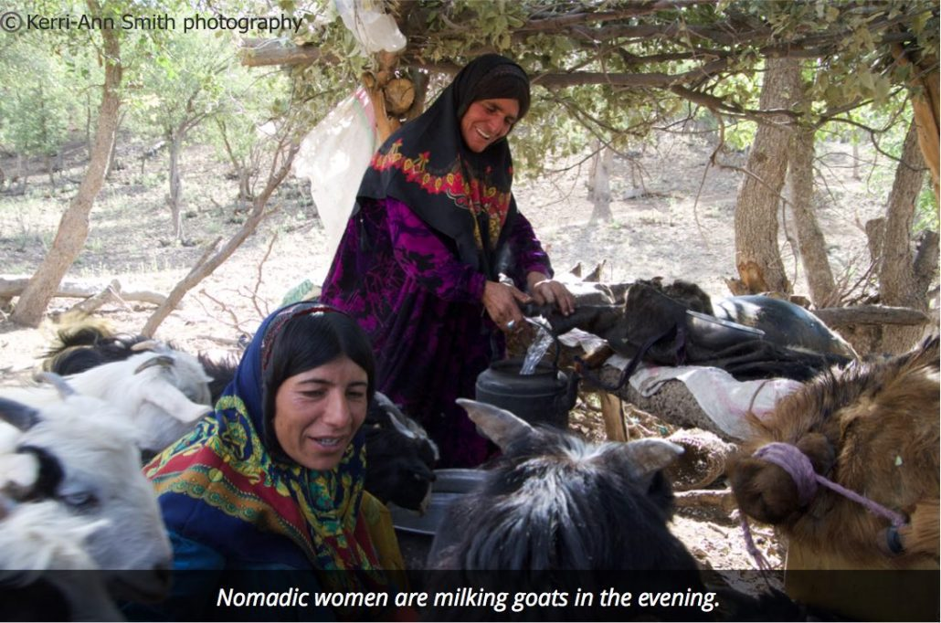 milking goats Bakhtiari nomads of Iran