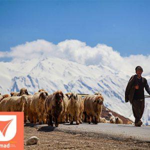 Odyssey Tour - Iran Nomad Tours