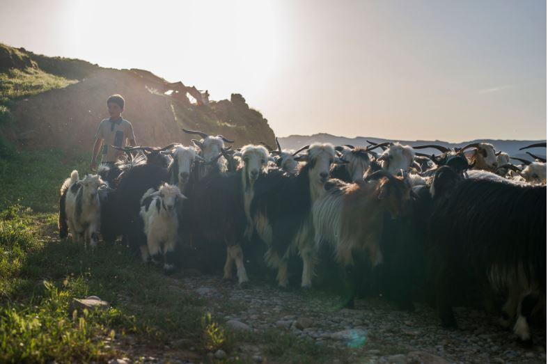 Bakhtiari Nomads - Persian Nomads