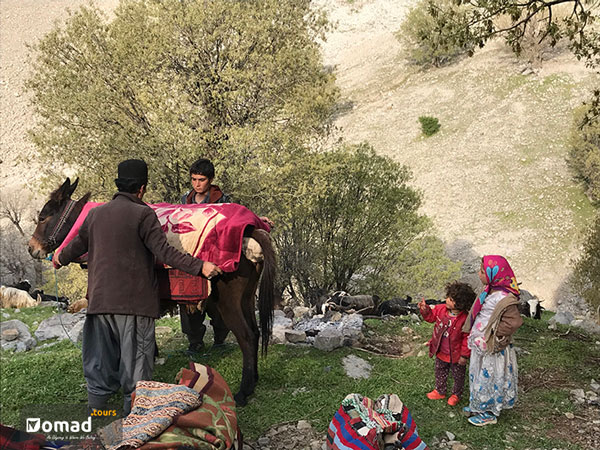 iranian nomads packing gear for seasonal migration kuch