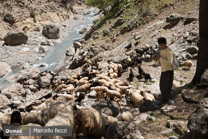 shepherd and flock of sheeps- iran nomad tours