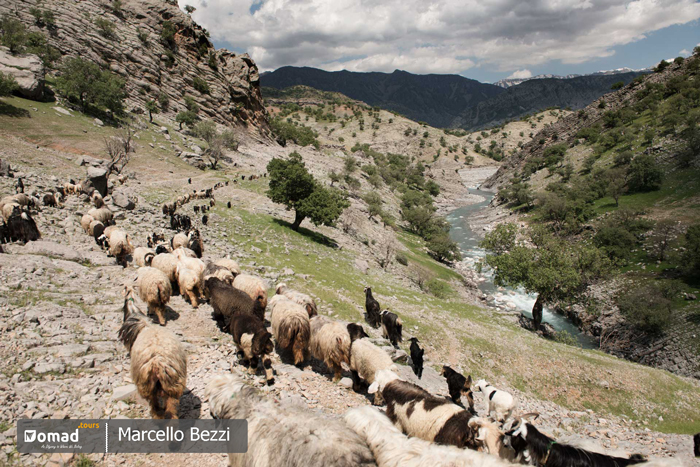 herd of sheeps and goats iran nomad tours