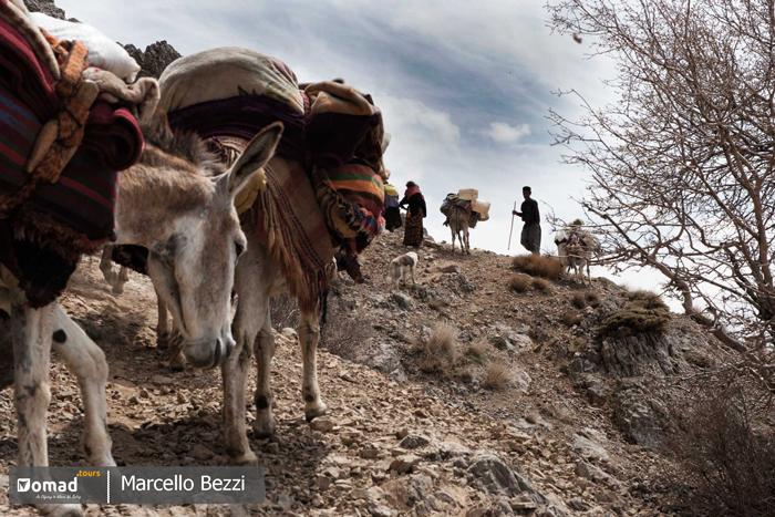 iranian nomadic family on the move, seasonal migration kooch