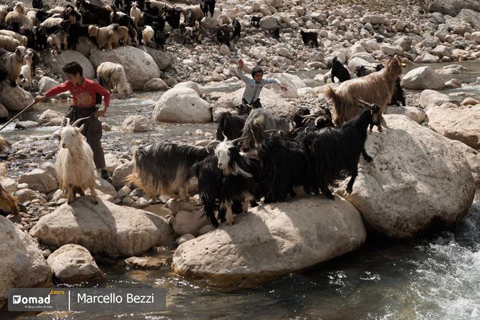 flock of sheeps and goats with nomadic shepherd