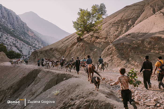 iranian nomadic family on the move, seasonal migration koch