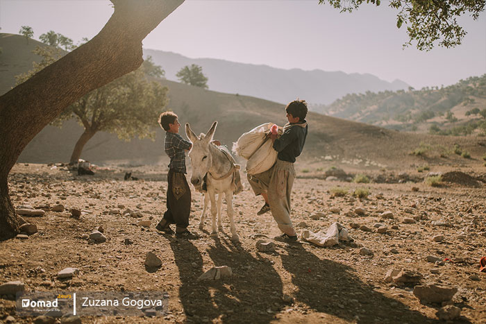 nomadic boys put their stock on donkey for seasonal migration, koch