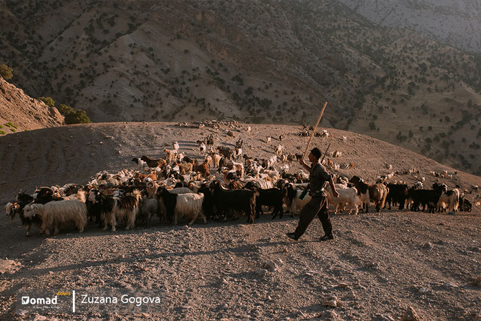 nomadic shepherd with her flock of sheeps