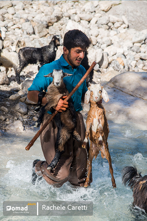 A shepherd passing the herd through the road