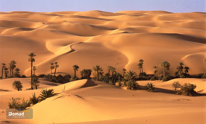 A desert in Persia with palm trees