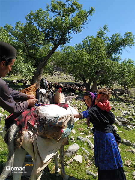 a nomad family packing their belongings to begin their seasonal transhumance