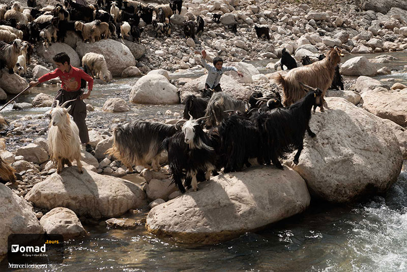 A herd of livestock in the mountain with two nomad boys