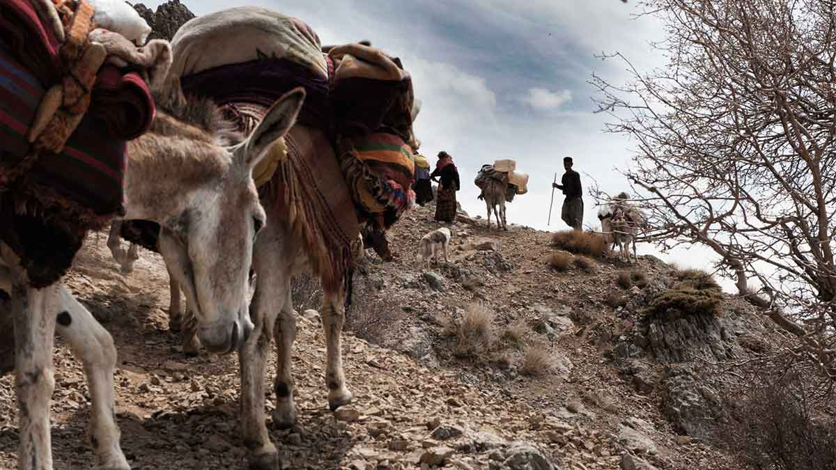 A picturesque scenery of a nomadic man & woman on a day of migration on top of the mountain with their mules carrying their belonging