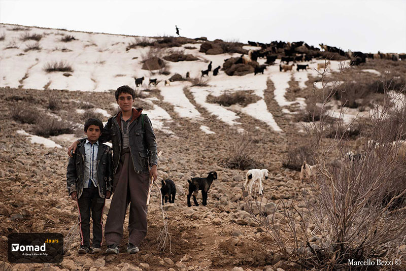 Two very young nomadic brothers shepherding their herd of livestock on a kooch day
