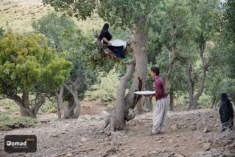 A nomad woman is sitting on a tree putting kashk to get dried. The nomad boy is standing by the tree to give his mom the next tray of kashk. There's a black goat in the corner