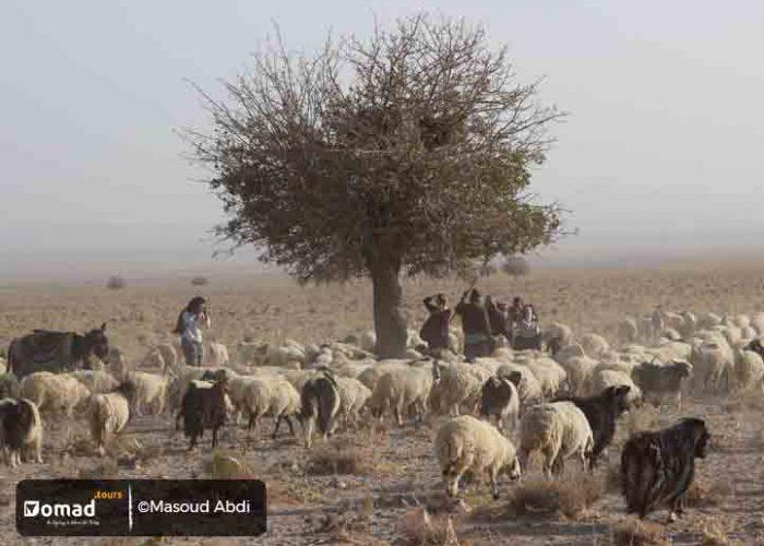 Nomads of Maymand Village